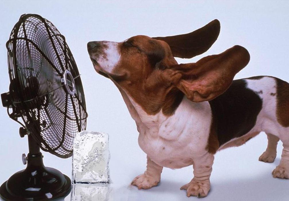 охлаждение вентилятором в жаркий день