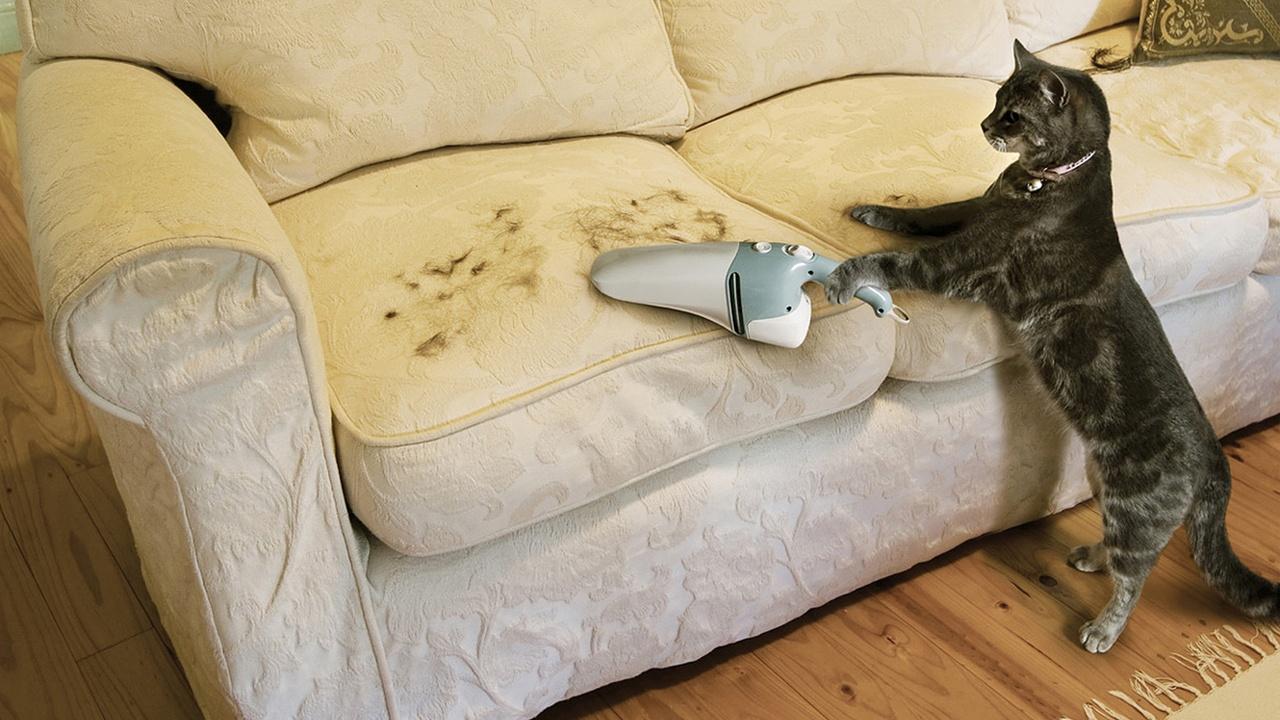 кот пылесосит диван от шерсти