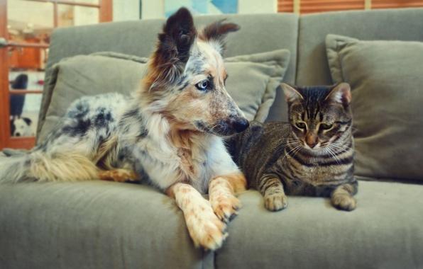 животные на диване