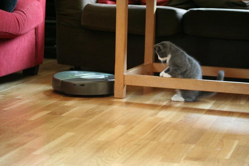 котенок и робот-пылесос